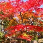 後楽園 紅葉