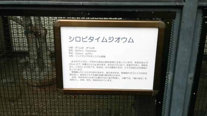 オウム 行船公園