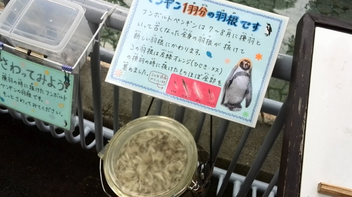 ペンギン 行船公園