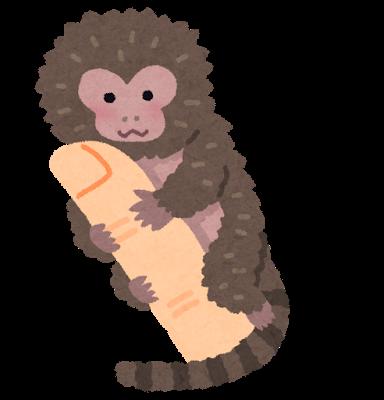 animal_pygmy_marmoset