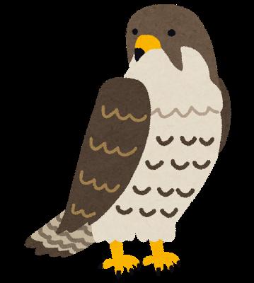 bird_hayabusa